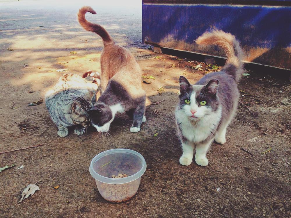 Bagi Kucing Makan