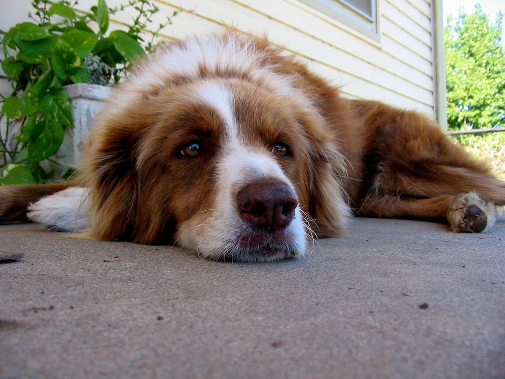 Hukum Kenajisan Anjing