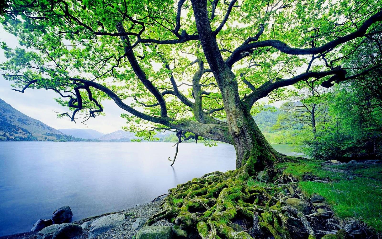 persekitaran yang baik membawa hati dan jiwa yang tenang. [Bin Muhamad]