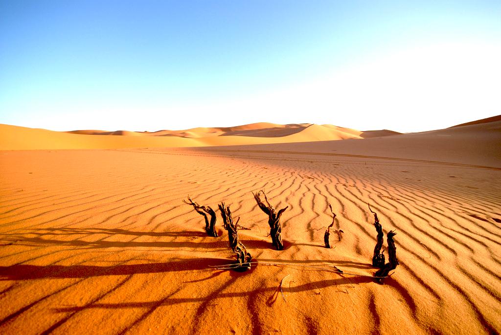 Padang Mashyar Panas Sahara